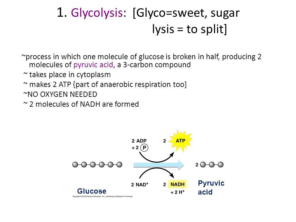 1. Glycolysis: [Glyco=sweet, sugar lysis = to split]